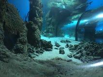 Sob a água do mar imagem de stock
