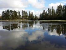 Sob a água e o campo de golfe dos gansos Foto de Stock