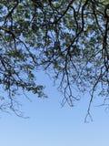 Sob a árvore imagem de stock royalty free