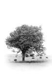 Sob a árvore Fotografia de Stock Royalty Free