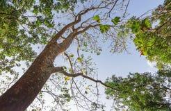 Sob a árvore Foto de Stock