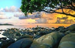 Sob a árvore Fotografia de Stock