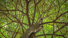 Sob a árvore Imagem de Stock