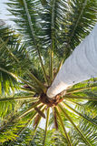 Sob a árvore de coco imagem de stock