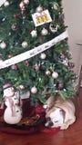 Sob a árvore de Natal Imagens de Stock