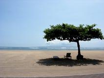 Sob a árvore, pelo mar Imagem de Stock