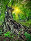 Sob a árvore verde grande Imagem de Stock