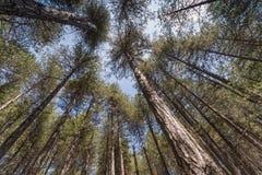 Sob árvores grandes Imagens de Stock Royalty Free