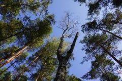 Sob árvores grandes na floresta Foto de Stock