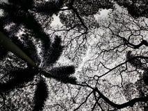 Sob as árvores fotografia de stock