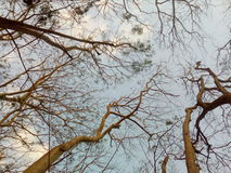 Sob as árvores Fotos de Stock