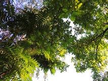 Sob as árvores do jardim Fotos de Stock Royalty Free