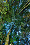 Sob a floresta da faia Imagens de Stock