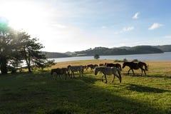 Sob a luz solar, os cavalos selvagens comem o vidro pelo lago Imagens de Stock