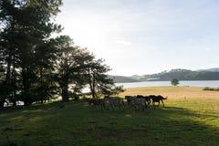 Sob a luz solar, os cavalos selvagens comem o vidro pelo lago Fotografia de Stock