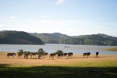 Sob a luz solar, os cavalos selvagens comem o vidro pelo lago Fotografia de Stock Royalty Free