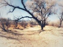 Sob o arco das árvores brancas Imagem de Stock