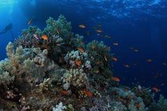 Sob o barco - recife Egipto do St John Foto de Stock Royalty Free