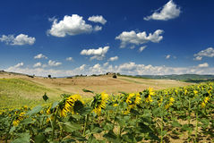 Sob o céu de Tuscan Fotos de Stock Royalty Free
