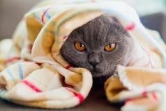Sob o cobertor Imagens de Stock Royalty Free
