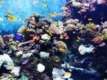 Sob o mar Fotos de Stock