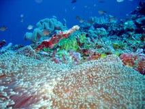 Sob o mar Imagem de Stock