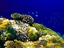 Sob o mundo da água em Maldives imagens de stock