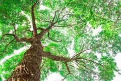 Sob o ramo de árvore com opinião verde da folha Foto de Stock