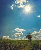 Sob o sol Fotografia de Stock