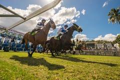 Sob os cavalos Fotos de Stock Royalty Free