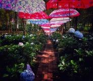 Sob os guarda-chuvas imagens de stock