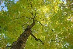 Sob a paisagem verde da estação de mola do verão da árvore Fotografia de Stock