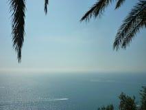 Sob palmeiras Foto de Stock