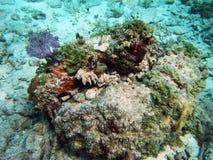 Sob a rocha viva do mar Imagens de Stock