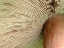 Sob um cogumelo imagens de stock