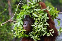 Sob um guarda-chuva ecológico. Fotografia de Stock Royalty Free
