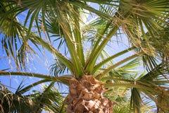Sob uma palmeira Imagens de Stock Royalty Free