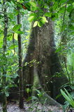 Soberania国家公园-巴拿马 图库摄影