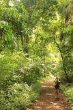 Soberania nationalpark, Panama - Augusti 6th av 2014: Sökande för fågeliakttagare för djurliv i detta regnskogområde som är etabl Arkivbild