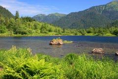 Sobolowi jeziora zdjęcia royalty free