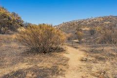 Sobras da escova após o incêndio violento Fotos de Stock Royalty Free