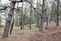 Sobras das trincheiras da grande guerra hoje em dia Campo de batalha da ofensiva de Brusilov ou do avanço de junho na parte diant fotografia de stock
