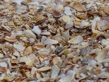 Sobras de escudos do molusco fotografia de stock royalty free