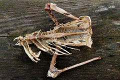 Sobras de um pássaro inoperante Imagem de Stock Royalty Free