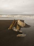 Sobras de uma baleia de bowhead no carrinho de mão Alaska Fotografia de Stock Royalty Free