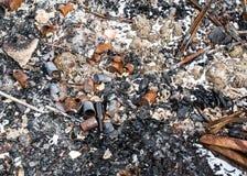 Sobras del hoyo del fuego Imagen de archivo libre de regalías