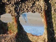 Sobras do naufrágio dispersadas na areia 10 imagem de stock