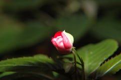 Sobre à flor Imagens de Stock Royalty Free