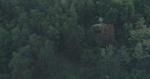 Sobre árboles forestales almacen de video