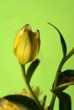 Sobre al flor Imágenes de archivo libres de regalías